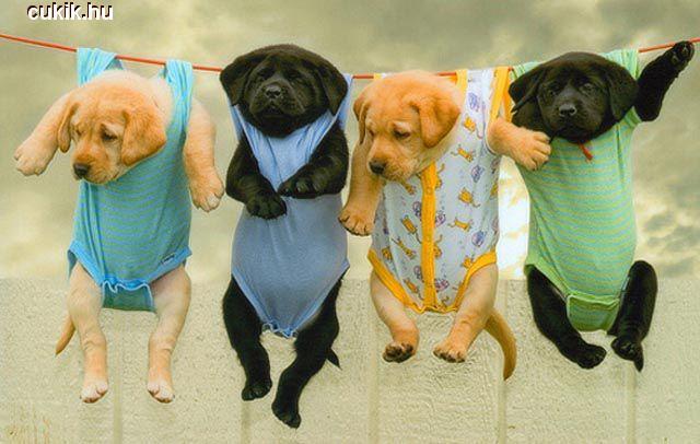 Bébi kutyusok