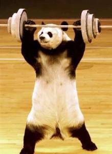 Gyúrós panda