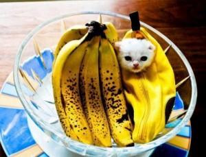 banán vagy cica