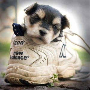 egy cipőnyi kutyus