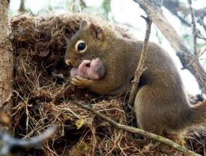 mókus bébi