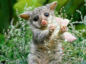 szedek egy kis virágot