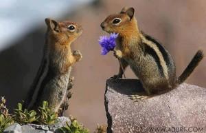 Egy kis romantika, TŐLEM- NEKED.......