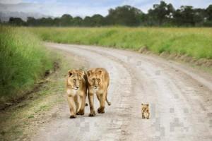 családi séta