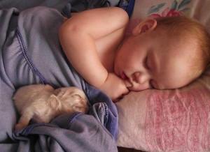édes álom