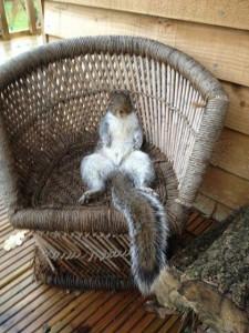 Nehéz a mókus élete