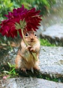Eső esetén