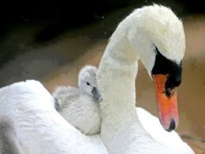 Anya, az anya